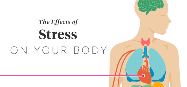 What stress does to the body